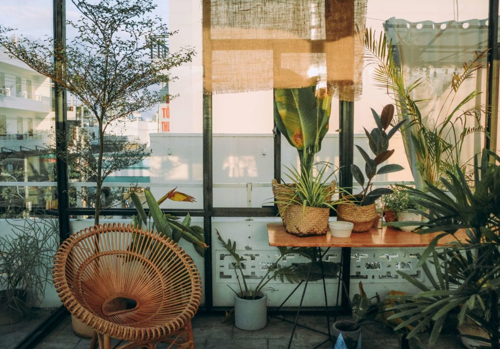 planta en casa
