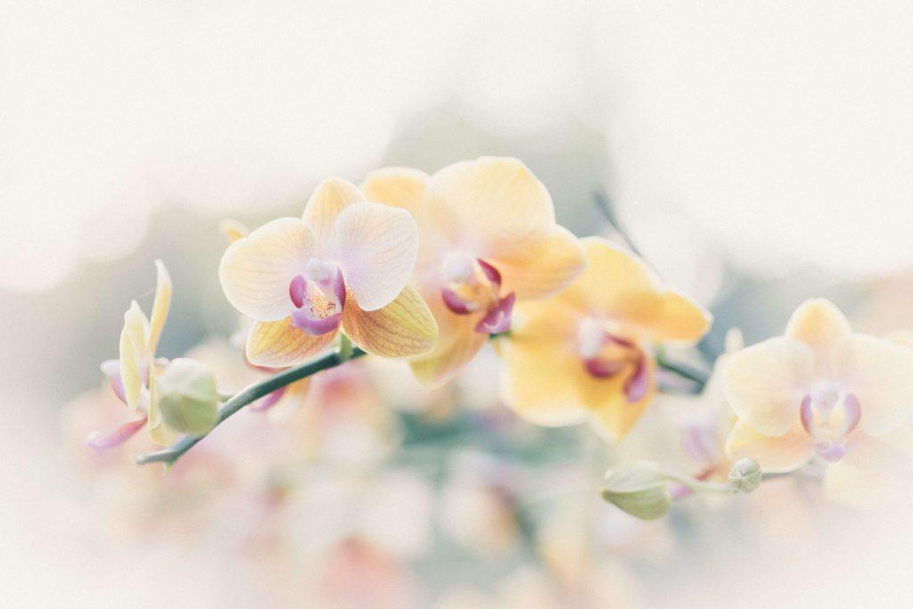 nutrientes de una orquidea
