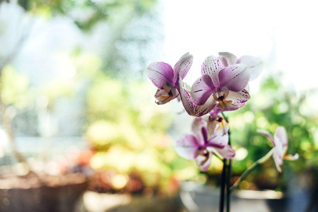 orquidea planta afuera