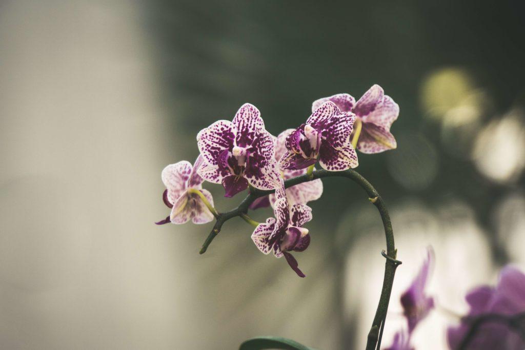 orquidea creciendo