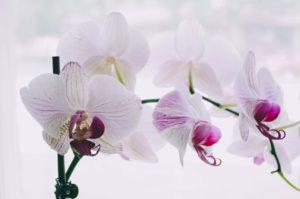 orquidea al sol