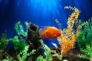 plantas de acuario imagen principal