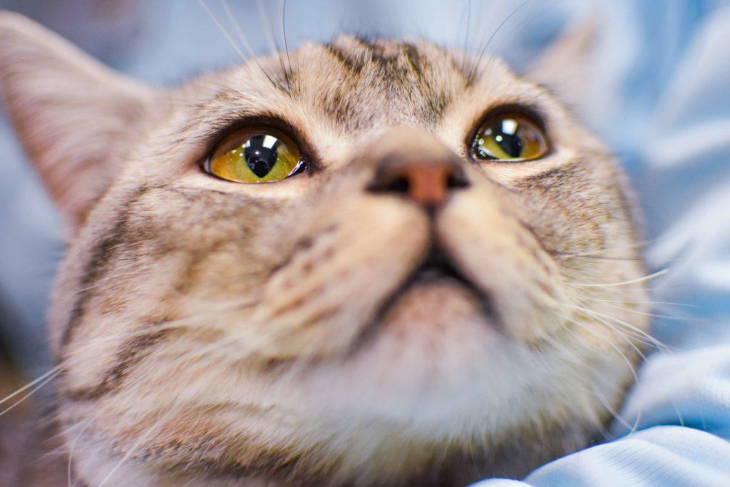 cara de gatito