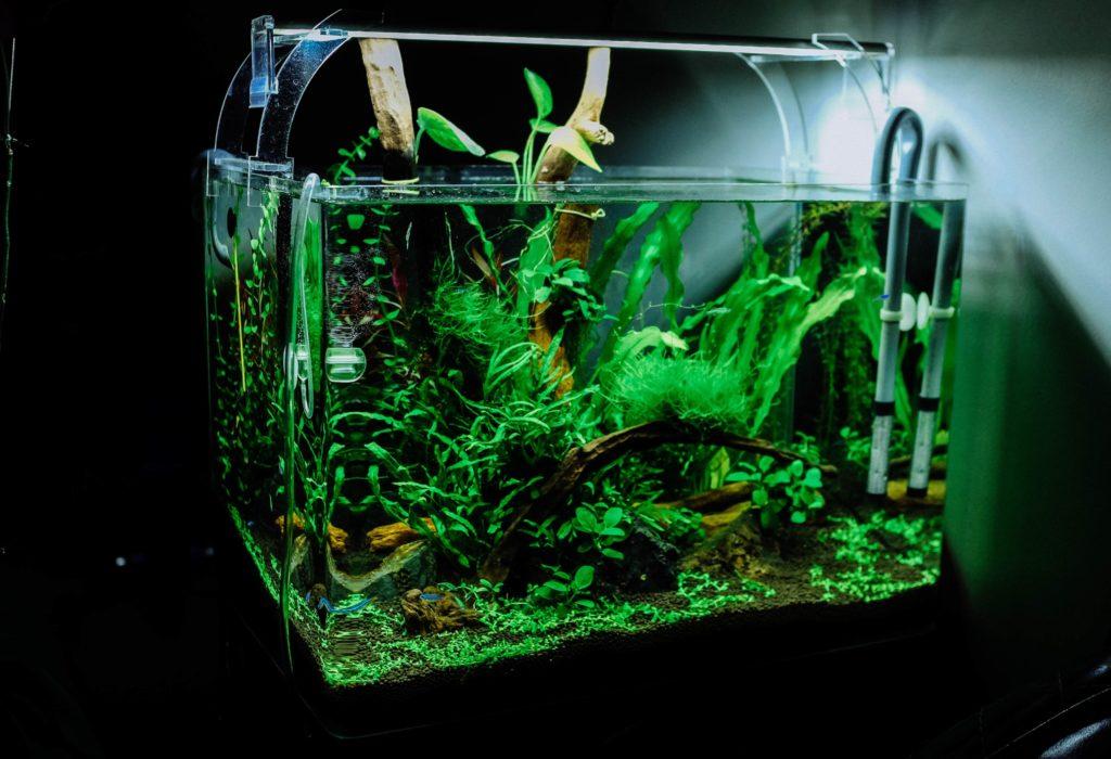 acuario con iluminacion