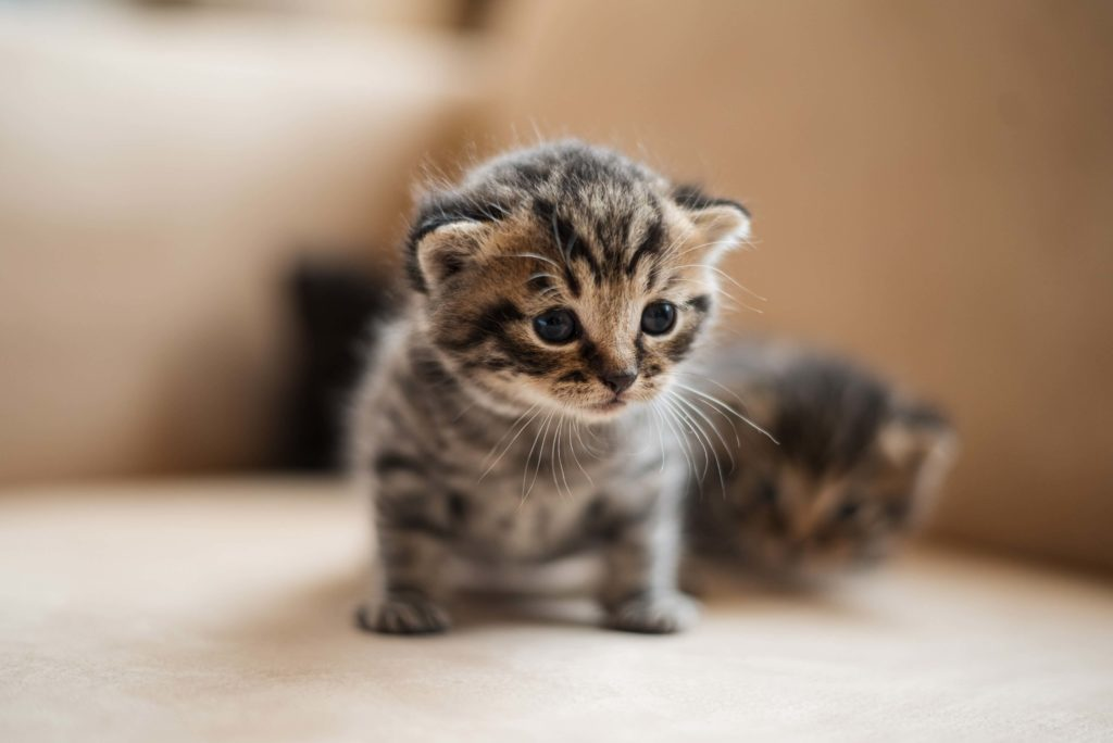 dos gatitos